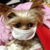 タバコによる受動喫煙の影響は愛犬・愛猫にもある